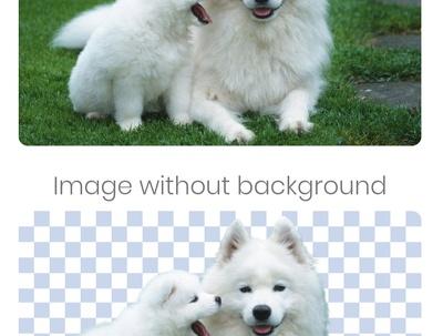 40 picture background remove