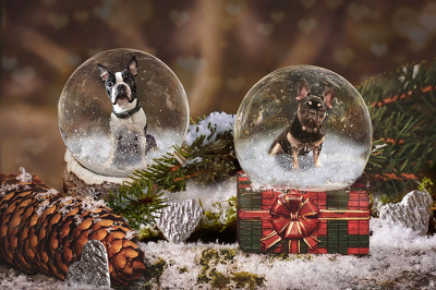 Make custom themed digital pictures of your pet