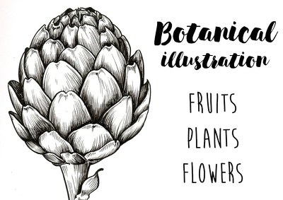 Draw botanical illustration