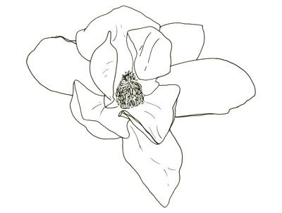 Draw a floral line illustration