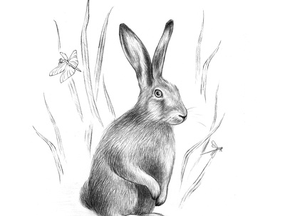 Draw beautiful pencil illustration ( animal, botanical )