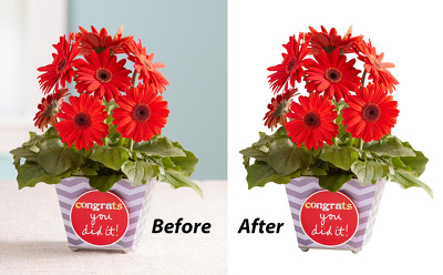 Remove background / cut out / clipping path 30  images