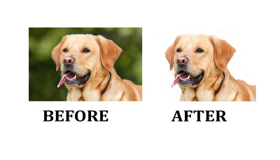 20 images Cutout / Photo Background Remove for professional use