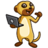 Meerkat Web Design Limited