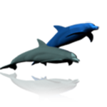 Dolphin 3D Design Shop W